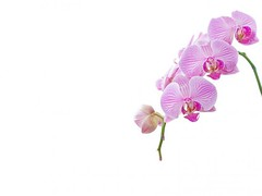 """orchid-white-picture-material_38-5911 • <a style=""""font-size:0.8em;"""" href=""""http://www.flickr.com/photos/128564434@N02/15346915509/"""" target=""""_blank"""">View on Flickr</a>"""