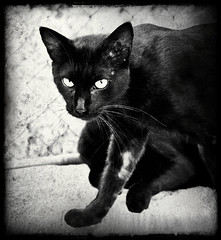 I knew she was a feline (Aviones Plateados) Tags: black cat canon rebel feline chat noir negro gato express gatto nero gat stranglers  hauskatze huuschatze t2i pixlr lamanoamiga eos550d kissx4 theeuropeanfemale