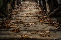 Autumn leaves on the ground (kyrsos1) Tags: park travel bridge november autumn color fall texture leaves season wooden woods october outdoor walk ground september fallen woodgrain palette ilobsterit lobsterfall