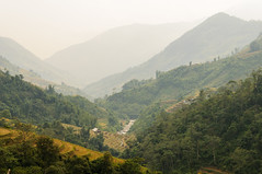 Trekking bij Sapa (jacobotten64) Tags: vakantie wandelen vietnam sapa rijstveld