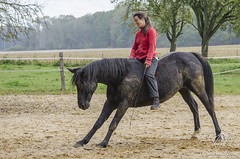 Antoinette Greindl (NosChevaux.com) Tags: horse caballo cheval chevaux paard paarden ethologie noschevauxcom antoinettegreindl
