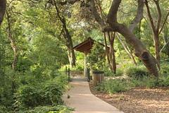 Zilker Botanical Garden (rocknbike.stillwagon) Tags: nature landscape calming