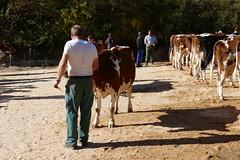 Viehschau Unterfrittenbach (Martinus VI) Tags: unterfrittenbach emmental viehschau landwirt landwirtschaft zollbrück swiss cattle competition concours des vaches vache cow cows kuh kühe fleckvieh