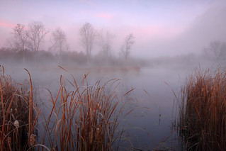 Half Day Pond, Lake County, Illinois