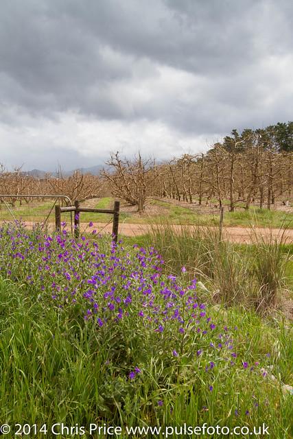 Viljoenspas, South Africa