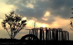 Sunset at 林後四林平地森林園區