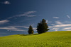 """Untitled"" (helmet13) Tags: d800e raw landscape firtree greenmeadow sky clouds silence sunshine bavaria ostallgäu aoi heartaward peaceaward platinumpeaceaward platinumheartaward 100faves world100f worldpeacehalloffame polfilter simplicity"