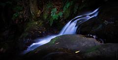 A moment in time at the Leura Cascades (dlerps) Tags: longexposure fern nature water creek forest waterfall bush stream sony sigma australia bluemountains cascades newsouthwales katoomba leura leuracascades jamisonvalley greatdividingrange lerps sonyalphadslr sigma1850mmf28exdcmacro diamondclassphotographer flickrdiamond sonyalphaa77v daniellerps coxsrivercanyonsystem hoyaprond500