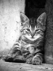 Los Gatos de Xilo (chicitoloco) Tags: cats cat chats chat gatos gato gata nicaragua neko katze managua gatitos  gatti kater gatita  gatito ktzchen gatas streetcat    koneko streetcats gattini  gatitas gattacci   xiloa  chicitoloco  xilo  jiloa  nekogasuki  jilo animalanimaleanimalesanimalsbizkaiacanoncatcatmomentscatnipcatschatcutecutecatcutecatscutekittencutekittensfelinefelinesfelinosfurryfuzzygatagatasgatinhosgatogatosgattogatuneandokattkatzekazketkittenkittenskittieskittyk