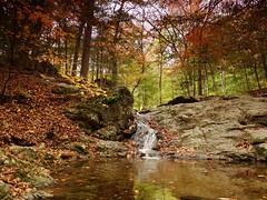 In the woods (Quik Snapshot) Tags: trees nature water leaves forest landscape waterfall rocks sony scenic autumncolors leafs hx200v