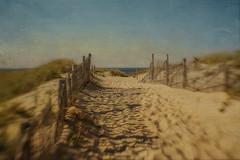 To the Dunes (SLEEC Photos/Suzanne) Tags: seascape beach fence coast sand provincetown capecod massachusetts dunes coastal capecodnationalseashore happyfencefriday