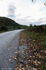 Localit Orato. Calitri (AV) (Vito Galgano) Tags: flora foglia orata luoghi calitri