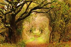 Bridal -Path~#MyAutumnwatch (Cal Killikelly) Tags: autumn trees way season cheshire path bridal wirral