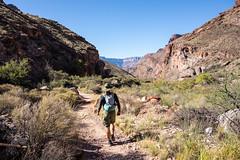 1410 North Kaibab Trail in Bright Angel Canyon (c.miles) Tags: grandcanyon dana grandcanyonnationalpark r2r northkaibabtrail rimtorim brightangelcanyon
