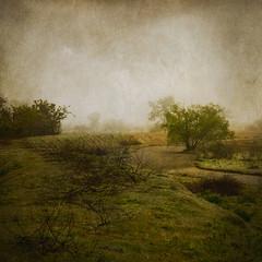 Entre Rios (Pablo A. Ferrari) Tags: trees mist painterly nature field fog stream arboles pablo ferrari textures campo neblina riachuelo niebla texturas