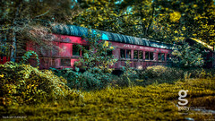 Mystery Diner (a2roland) Tags: a2roland a2rolandyahoocom flickr nikon normanzeb normanzeba2rolandyahoocoma2roland photo photography gmo picture car caboose diner restaurant eatery belvidere nj new jersey trees leaves green lighting glass window abandoned ghost train locomotive engine auto transport hotel motel grass sun puddle gettyimages getty image stock id 552062837 © norman zeb all rights reserved