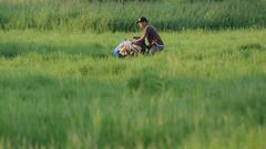 Manglalako (BoyMasskara) Tags: grass bike peddler undas chicharon