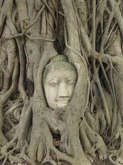 "Wat Phra Mahathat <a style=""margin-left:10px; font-size:0.8em;"" href=""http://www.flickr.com/photos/83080376@N03/15537234517/"" target=""_blank"">@flickr</a>"