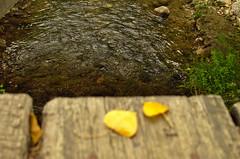 Otoño... Autumn... (ndrg) Tags: oscar jimenez oscarjimenez óscarjiménez sot de chera sotdechera sote