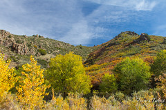 Some of the fall foliage in Waterton Canyon
