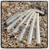 Clam #clam #skjell #sand #beach #detail... (Anders SB) Tags: detail beach nature hongkong sand clam lantau skjell lokeiwan uploaded:by=flickstagram instagram:photo=844913449934614861202339955