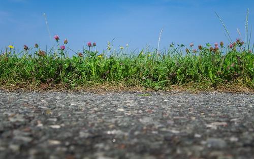 Asphalt Meadow; Asphalt Weide (16:10)
