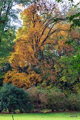 Herfstkleuren (Henk M gardenphotoblog) Tags: autumn herfst arboretum delutte poortbulten nimg4472pse