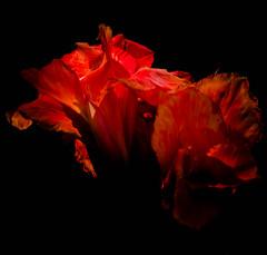 _14L7444 (5816OL) Tags: flowers dad arboretum arboretum2014