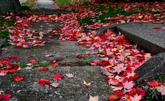 Autumn In The Air (chrishowardphotography.com) Tags: autumncolors autumntrees beautifulhouse autumnintheair autumninohio gorgeousautumn scenicautumn