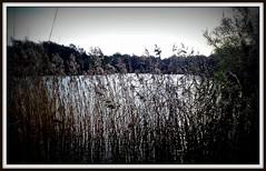 Black Lake (Riik@mctr) Tags: lake black nokia cheshire common 8gb wilmslow n95 lindow