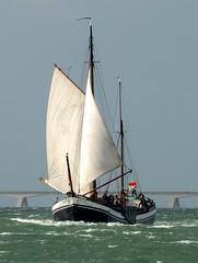 10153233_794972380566105_5858372282230447464_n (Jeroen Onck) Tags: dutch zeeland barge stichting platbodem bruine zeeuwse bietentocht vloot beurtvaart