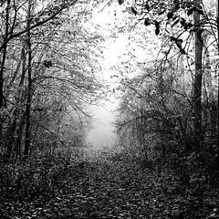 mystery (Darek Drapala) Tags: autumn trees light blackandwhite bw tree nature mystery forest dark lumix blackwhite path poland polska panasonic mystic fogg panasonicg5
