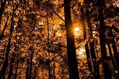 Autums Light (Images By Cathrine) Tags: autumn trees light orange sun fall landscape bright flare sunburst burst sunflare