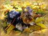 EMMI & AUTUMN FALL (swetlanahasenjäger) Tags: deutschland greifswald mecklenburgvorpommern coth goldenart alittlebeauty coth5 clydesfriends thesunshinegroup sunrays5 26102014