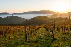 sunday sunrise (Kitschi_) Tags: autumn art sunrise landscape sterreich niko