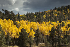 Fall Colors in Flagstaff (fenicephoto) Tags: