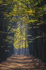 Kaapsebossen Doorn (PeterWdeK) Tags: wood autumn trees fall netherlands forest bomen utrecht doorn kaapsebossen herfst nederland natuur leafs bos forests natuurmonumenten kleuren heuvelrug bossen