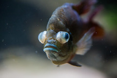 A Pill or Three (Thomas Hawk) Tags: america chicago cookcounty illinois johngsheddaquarium museumcampuschicago sheddaquarium usa unitedstates unitedstatesofamerica aquarium fish fav10 fav25 fav50