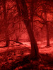 Red Tree Root (kckelleher11) Tags: 1445mm 2017 ep2 ireland march polympus red tree infrared panasonic root trees