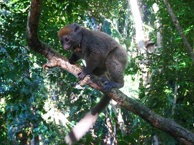 Madagascar2010 - 51