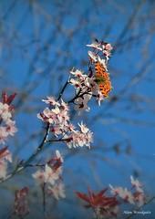 Spring time - Buckinghamshire (Alan Woodgate) Tags: