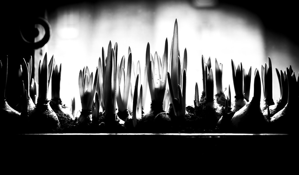 The Worlds Best Photos Of Noir And Noirteblanc Flickr
