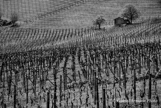 La culla del Monferrato - Mombaruzzo