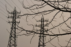 In&Organic #25 (TheManWhoPlantedTrees) Tags: tmwpt energy lines tree árvore explore