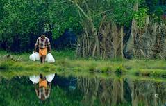 Life (anu's prime photos) Tags: ulavaipu kerala keralatourism infopark cherthala alapuzha water life reflextion reflection green nature anusphotography anusprimephotos