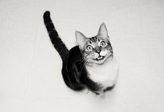 A happy cat (mcg0011) Tags: gato cat felino feline happy feliz kitty cute pet mascota cucho chat kat katt kot hauskatze manuelcarrasco