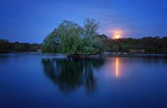 Blue Moon (Langstone Joe) Tags: petersfieldheathpond bluehour fullmoon longexposure lake