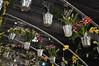 2017-03-17_1334n_waldor (lblanchard) Tags: 2017flowershow displaygarden waldor