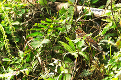 IMG_8458_DS (Ganugapenta NaveenKumar Reddy) Tags: northeast northeastindia mishmihills canon7d disnapper guyonblackybx gnaveenkumarreddy ganugapentanaveenkumarreddy gnr ganugapenta
