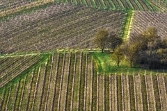 Early spring vineyard (Claudia G. Kukulka) Tags: vineyard weinberg rebberg tree baum bench bank landscape landschaft abstract abstrakt happy friday randersacker würzburg germany deutschland